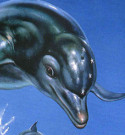 Ecco the dolphin box art review page| BOX=ART